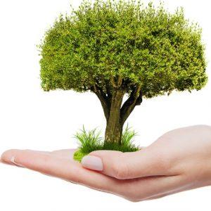 Etiquetas Ecológicas y complementos